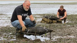 Researchers Explore Using Empty Oyster Shells to Decrease Acidic Seawater