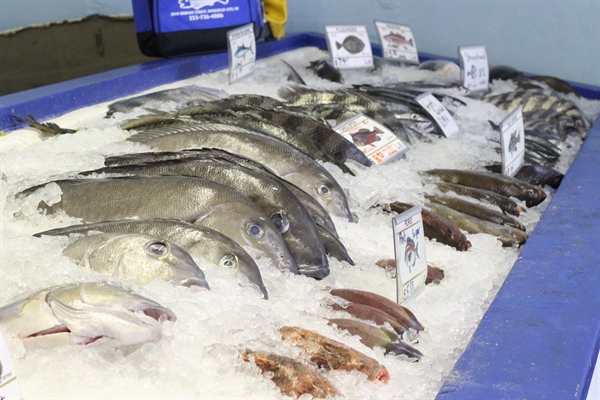 Pictures Illustrate the State of North Carolina Fisheries