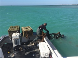 Florida Sea Grant Helped Save Keys Lobster Industry Nearly $4 Million After Hurricane Irma