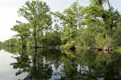Mesocosms, Sensors and Otoliths: Tools to Improve North Carolina Water Quality