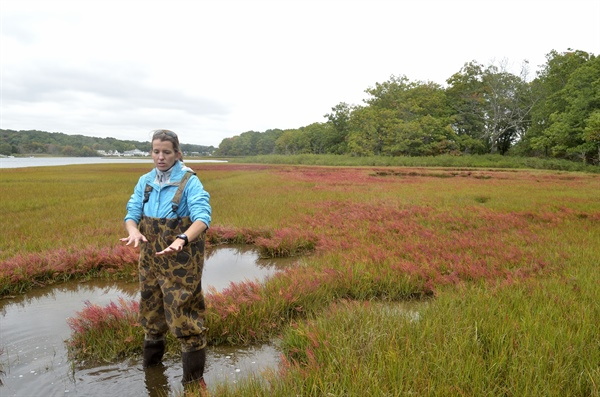 Tracking Salt Marshes: Impacts of Sea Level Rise