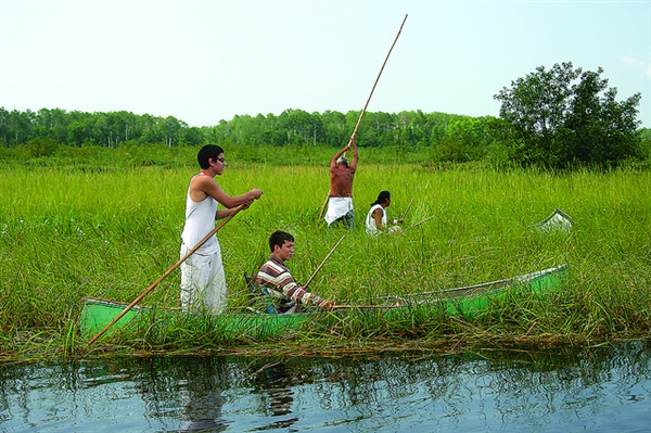 Sea Grant and partners work together to restore culturally important wild rice