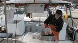 Seafood direct marketing: Sea Grant experts contribute to UN report