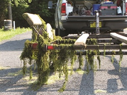 North Carolina Coastal Collaborations Focus on Invasive Hydrilla