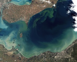 Ohio Sea Grant Leads Charge Against Harmful Algal Blooms