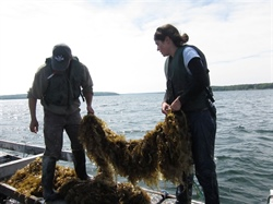 NOAA Sea Grant Awards $1.9 Million for New Aquaculture Projects