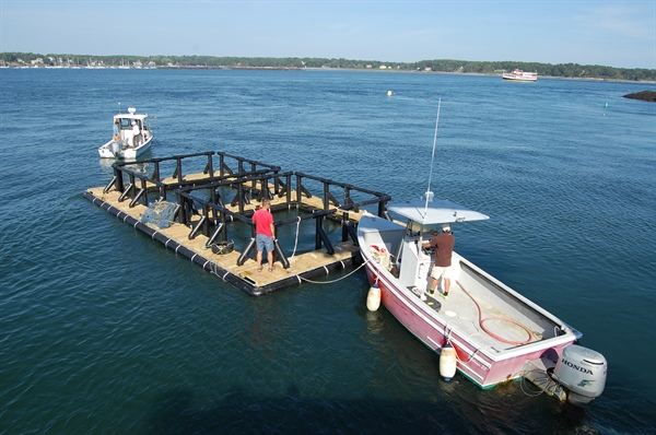 UNH-led Team Designs Aquaculture Raft to Provide Four-Season Source of Seafood and Sea Veggies