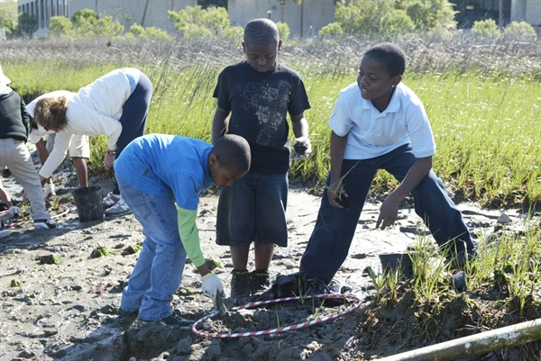 Healthy Coastal Habitats: Pluff Mud Serves as a Base for the Marsh, and for Innovative Coastal Education Programs