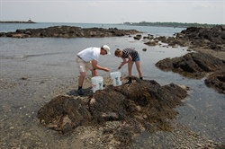 Sustainable Aquaculture: New expertise and education efforts developed for New Hampshire's growing interest in seaweed