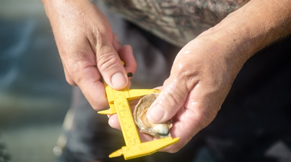 Sustainable Aquaculture: Georgia Sea Grant opens state's first oyster hatchery