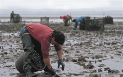 Sustainable Development: Taking the guesswork out of shellfish aquaculture planning