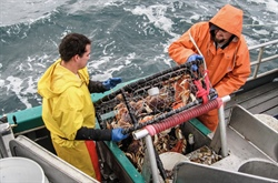 Crabbers offer ideas on how to reduce injuries at sea