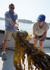 Kelp line
