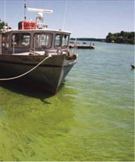 Cyanobacterial bloom in Lake Erie