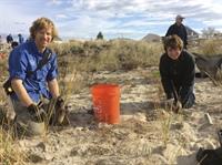 Members of the UNH Coastal Habitat Restoration Team help volunteers plant beachgrass.