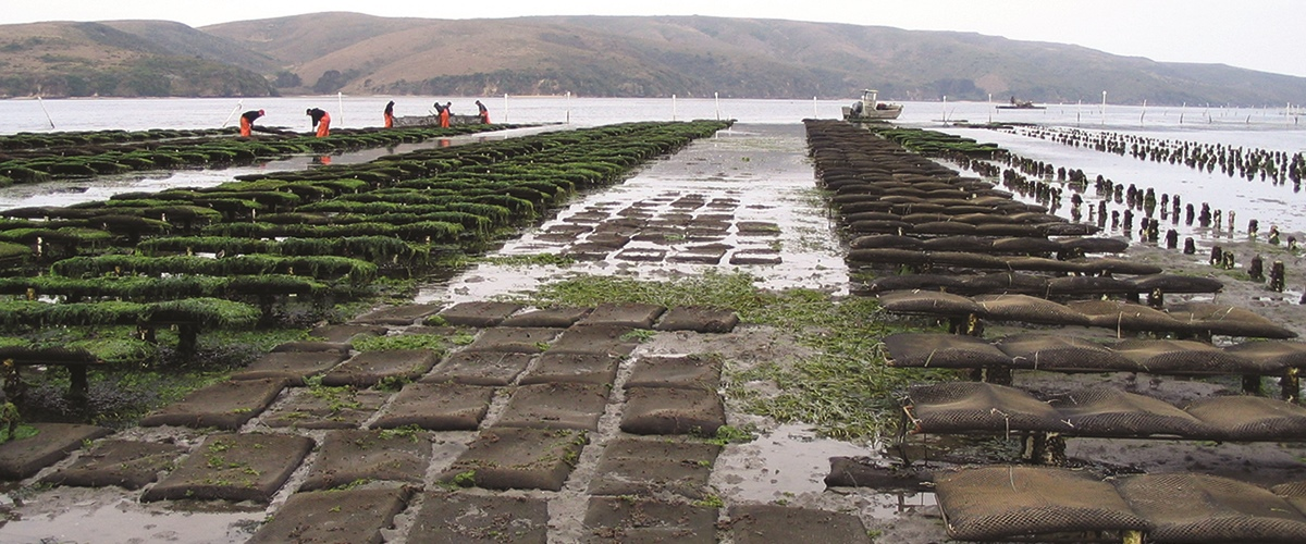 West Coast Shellfish Industry Recognizes Consequences of Ocean Acidification