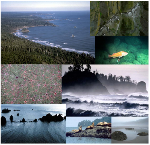 Olympic National Marine Sanctuary Climate Change Assessment