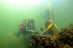 Shallow Shipwreck: Surveying Davidson's Adriatic