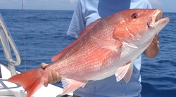 Mississippi-Alabama Sea Grant announces red snapper abundance funding opportunity