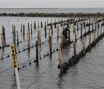 Sea Grant Integrated Program Expands Oyster Farming Industry in Alabama