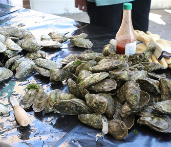Expanding Oyster Aquaculture Benefits North Carolina's Economy and Environment
